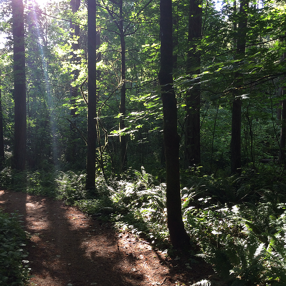 Morning Forest Walk